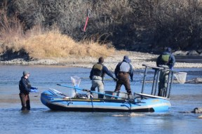 A team of CPW aquatic biologists watch as an electrode flies into the Arkansas River. The biologist in the water guides the drift raft as the three on board toss the electrode and scoop fish.