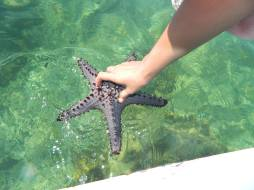 The biggest and the only purple starfish I've seen so far