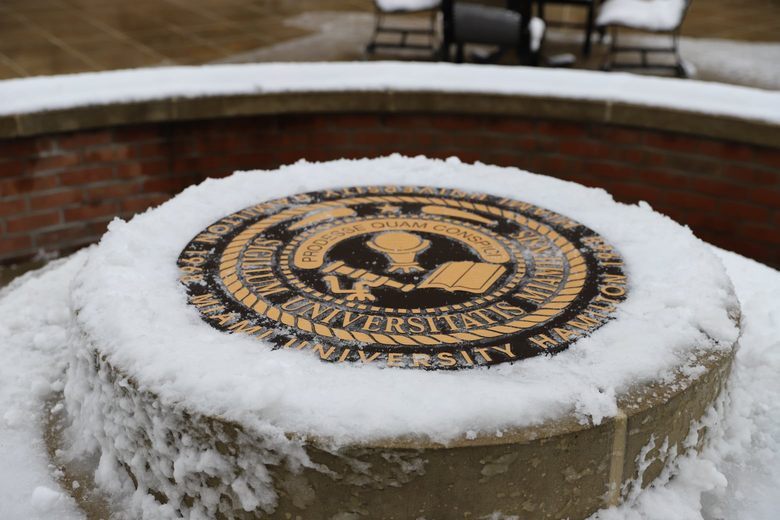 Seal at Miami Regional campus in the snow