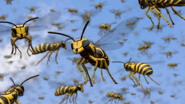 5 Tips To Survive The Swarm Of Wasps Headed Straight For Miami County