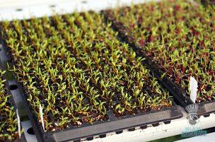 Swank Farms - Gauchos Asado Dinner - Herbs