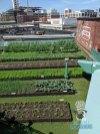 Fenway Park - Farm