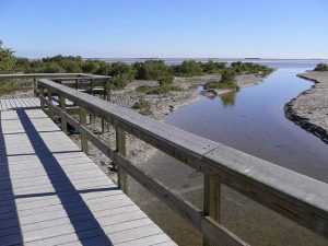 everglades-snake-bight-trail