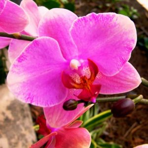 miami-beach-botanical-garden