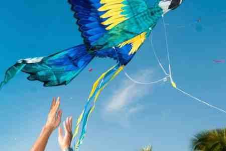 parrot-kite