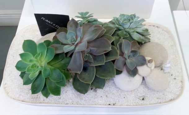 Wynwood - Plant the Future