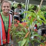 Free trees for Miami-Dade residents