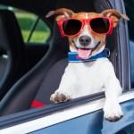 Dog-friendly spots in Miami