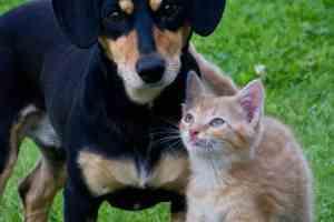 Mega Pet Matchathon adoption event