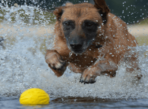 Read more about the article Dogs Toys to Avoid & others that Give the Same Result