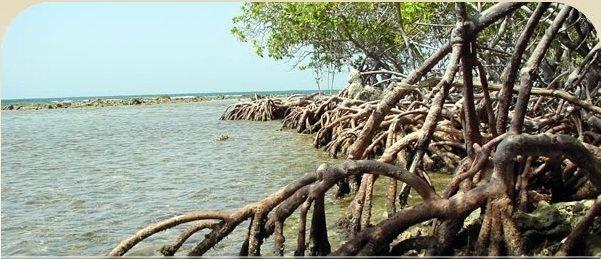 Estuario de la Bahía de Jobos (Guayama-Salinas) (tomado de www.jbnerr.org)