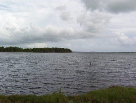 Los estuarios y sus problemas ambientales