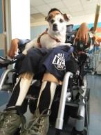 Pet Therapy al Buzzi - Reparto di Terapia Intensiva