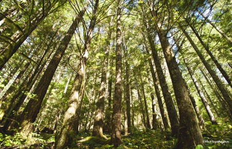 Grove of trees in Opal Creek Wilderness