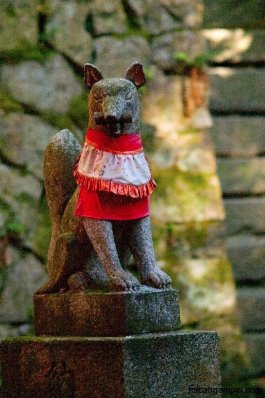 fushimi-inari-fox-portrait-kyoto-micah-gampel-2010