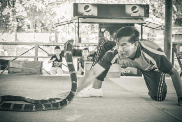 蛇と戦う男