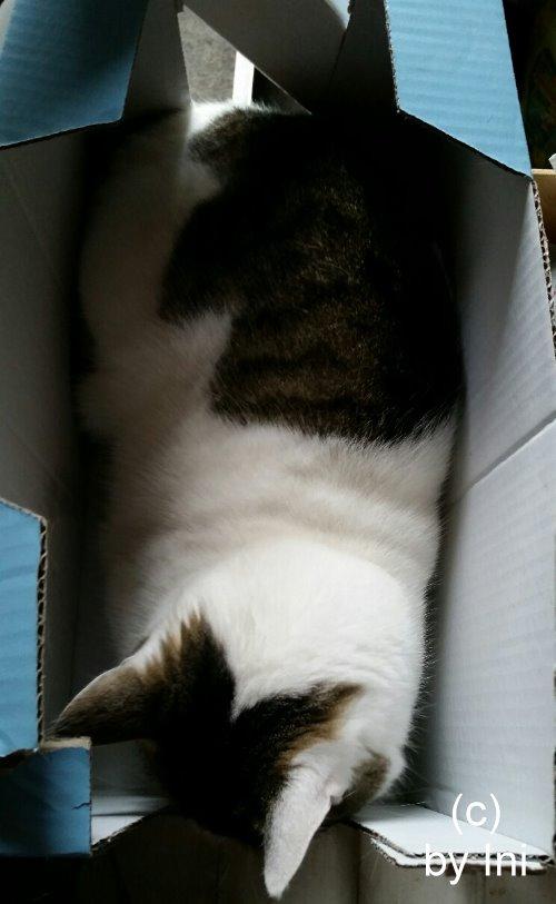 Kistenkatze