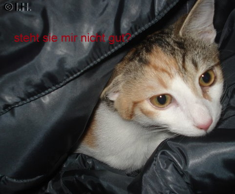 Meine Jacke
