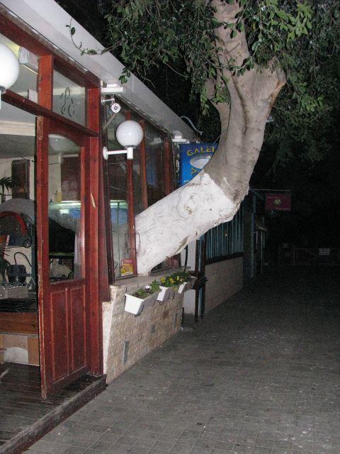 Дерево в баре