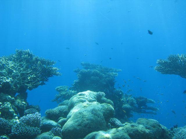 На подводной обсерватории в Эйлате