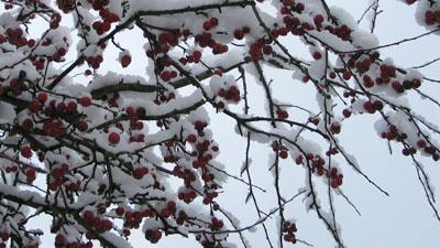 ny-snow_04