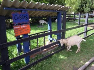 300 goats