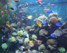 Many colors of fish in just one of the aquariums
