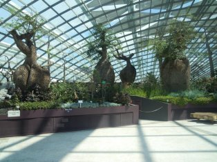Flower Dome trees from Australia