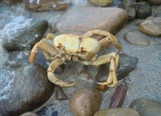 27 crab