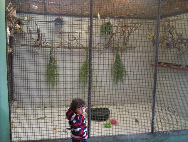 bird cage 640 x 485