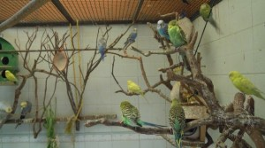 birds in cage 640