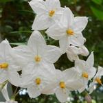 Muu flowers 150