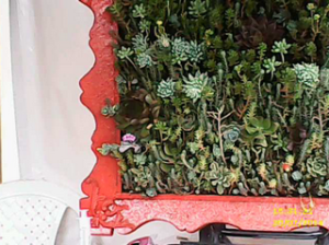 a hanging wall plants large