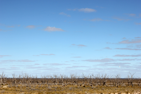 Lake Menindee is dry