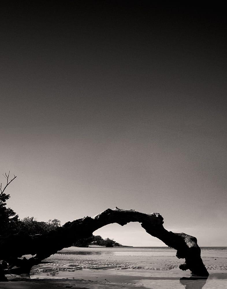 Fine Art Photography Michael David Adams Photographer Limited Edition Fashion mangrove