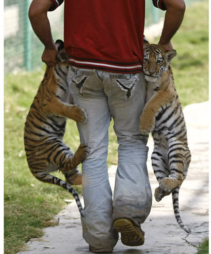 Exotic animal trade an unregulated problem in Iraq...