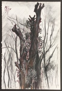 Dead Tree, Holland Park, London, 1981