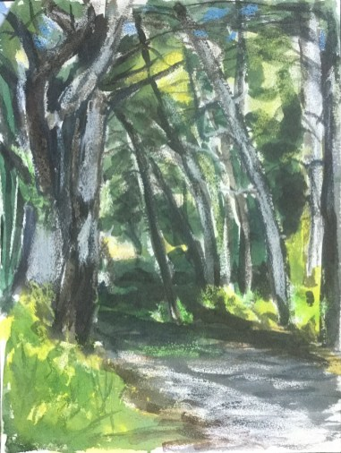 Wooded Path, Gualala, 2013,