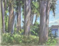 Trees, Garden Cottage, Port Ludlow, June, 2016