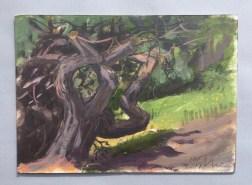 Gnarly Tree, Shiosai, Gualala, July 6th, 2019