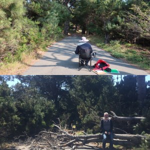 """MG painting """"Driveway, Shiosai """", July 5th, and fallen tree, July 8th."""