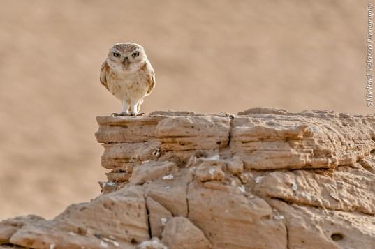 perched near it's burrow