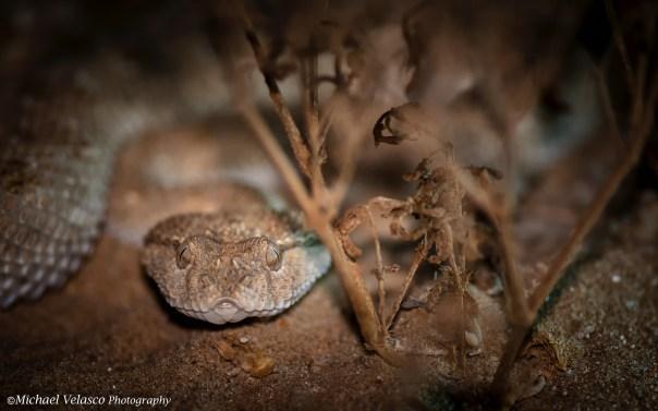 Hiding next to a dried shrub.
