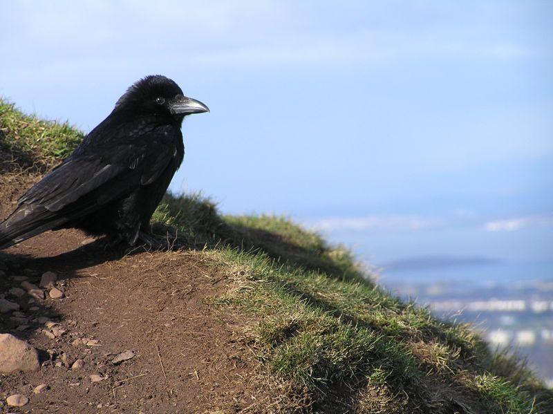 A photogenic bird.