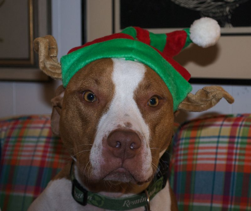 Diesel not so thrilled with his new hat.