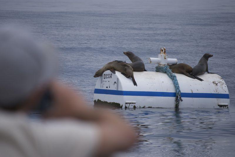Those (quixotic) seals move quite quick.