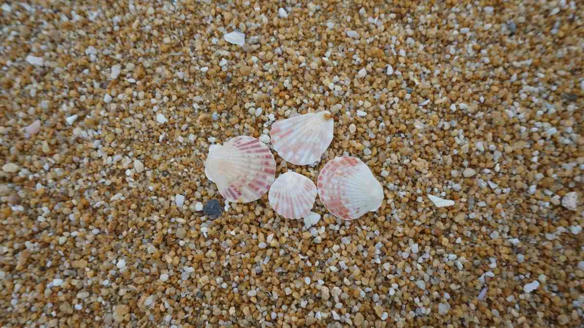 shells on shore