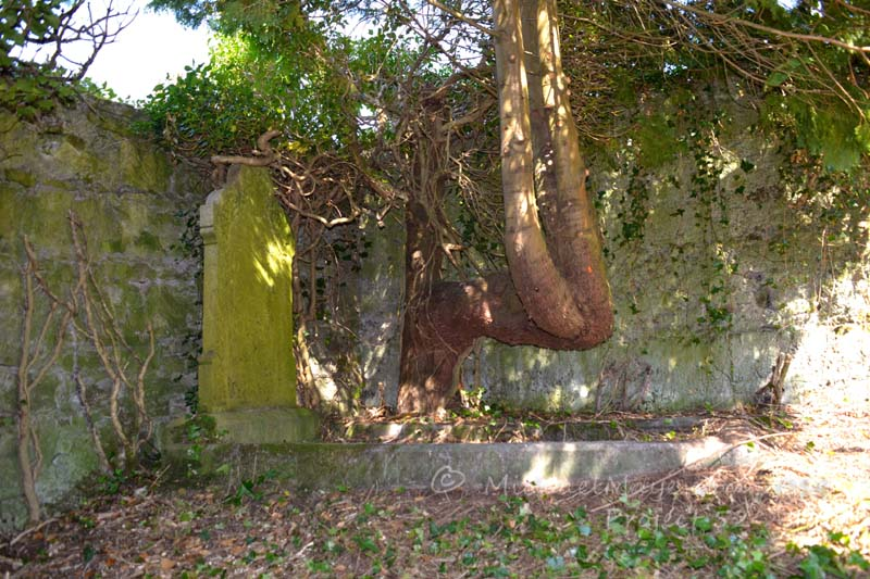 Old Protestant Graveyard In Swinford – Project 52 #5