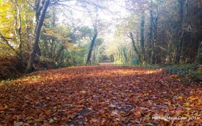 Autumn Colour 2016