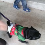 mayo gaa mascot for 2017